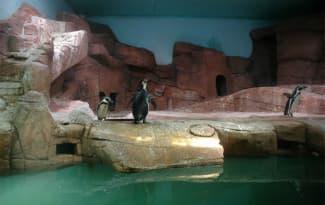 27-Aquarium-Protaras