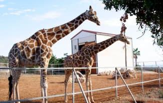 29_Paphos-Zoo-2-web