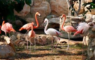 30-Paphos-Zoo-3-web