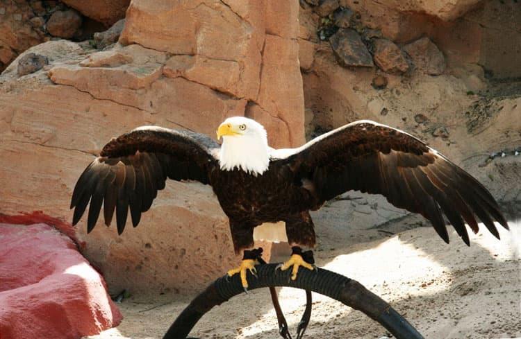 11-jungle-park-tenerife-eagles