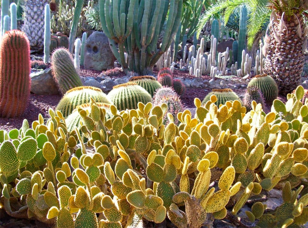 25-cactus-park-gran-canaria