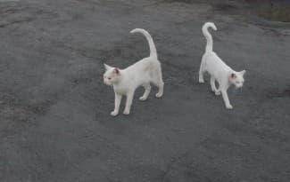 cats-rodos-greece