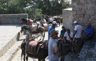 Greece-rodos-lindos-donkeys
