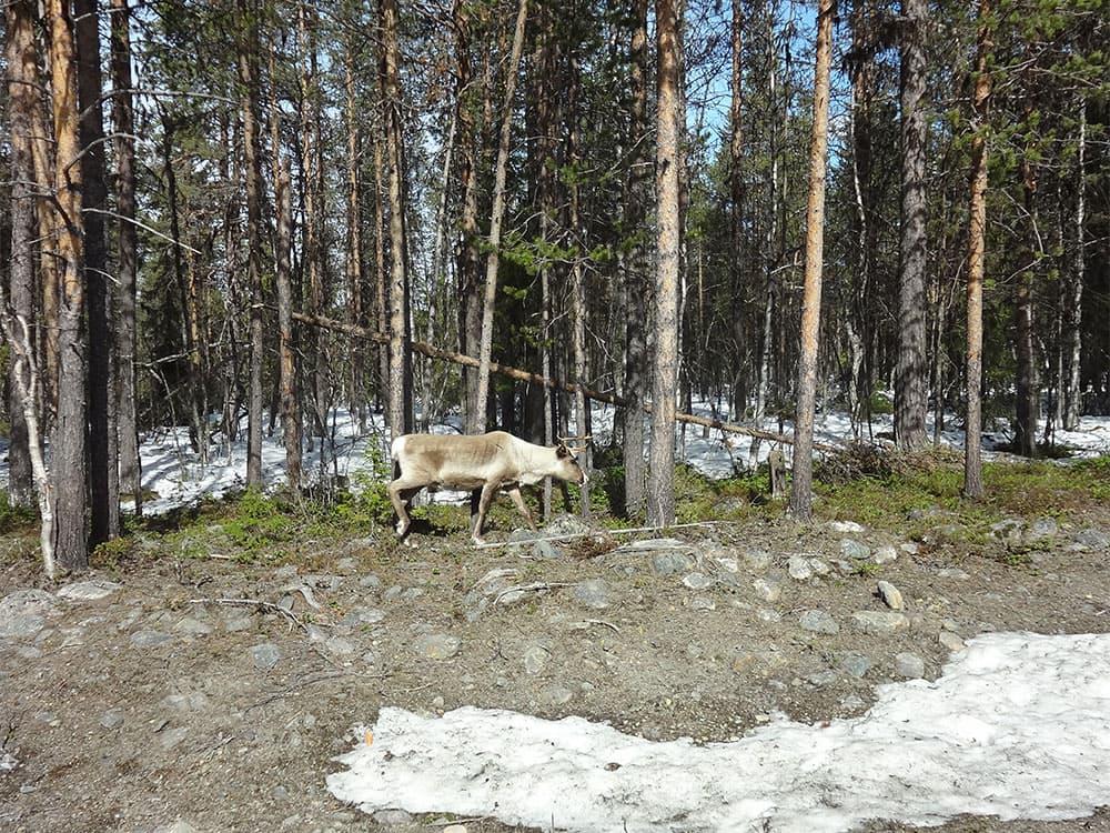 14a-dsc10033-216-levi-finland