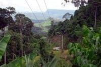 ЛЭП в джунглях