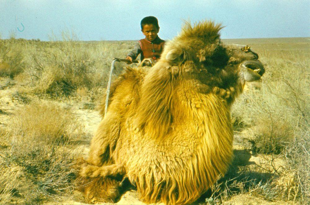 В пустыне Кызылкум