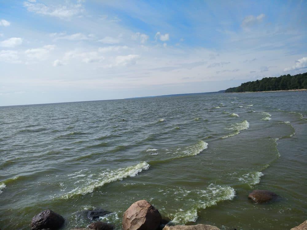 Зеленогорск залив