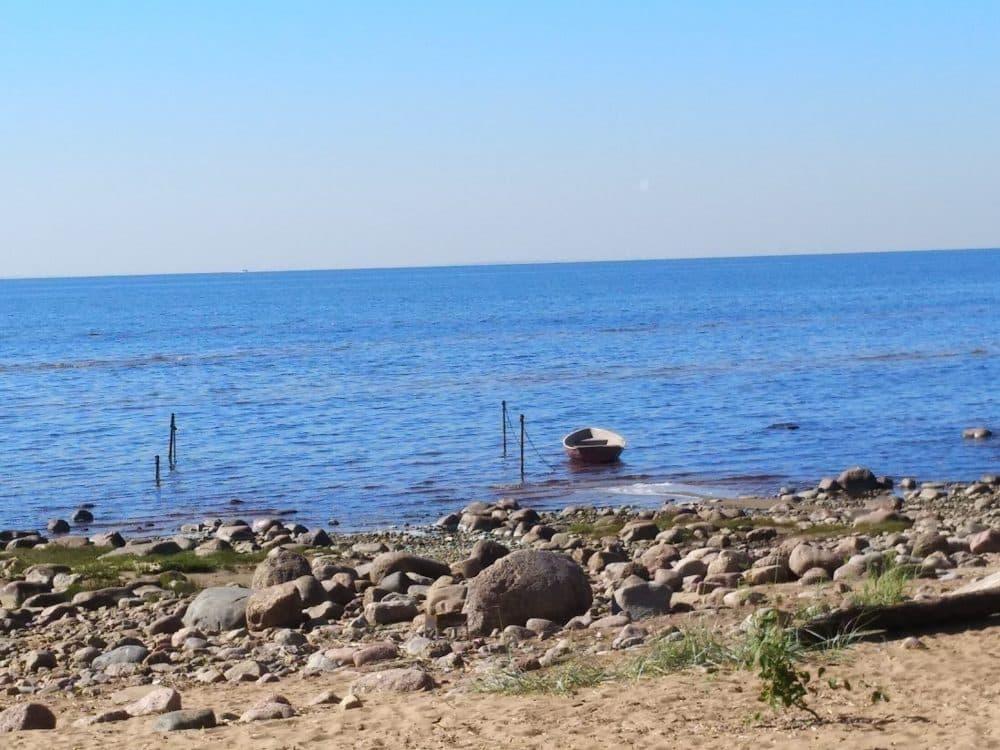 Зеленогорск Финский залив фото