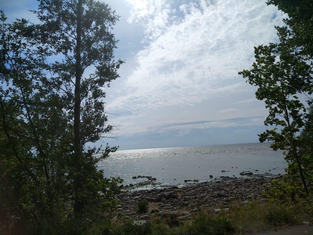 Зеленогорск Финский залив
