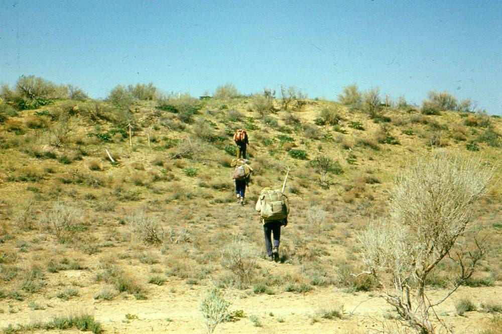 Кызылкум пустыня фото