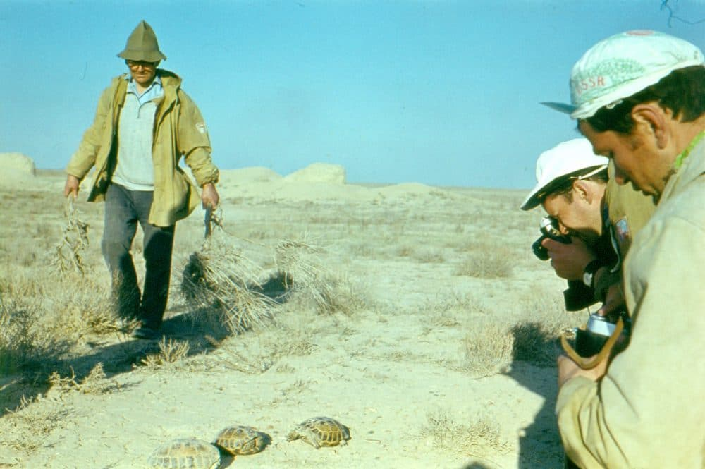Фото пустыня Кызылкум