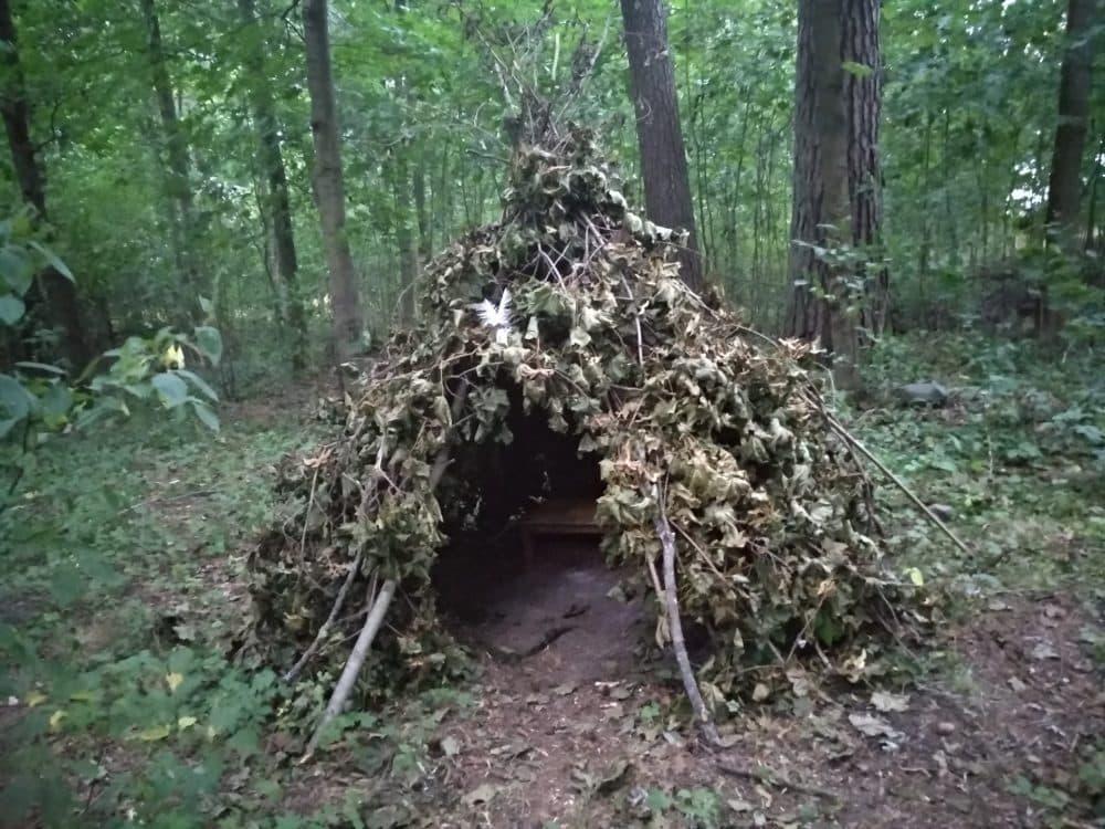 Зеленогорск лес фото