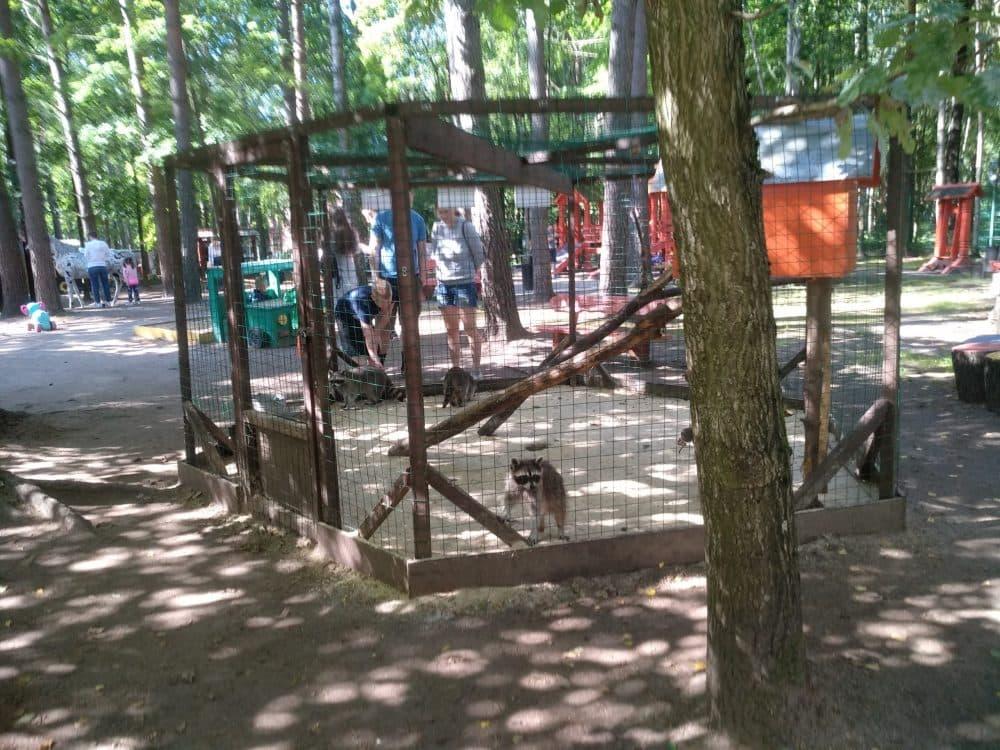 Парк Зеленогорска фото