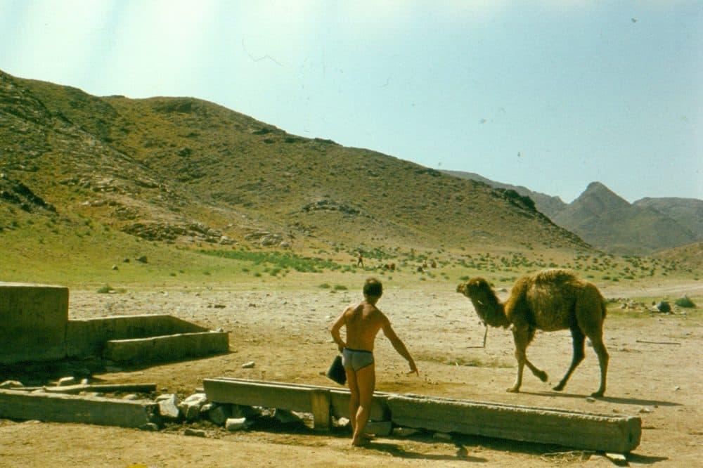 Казахстан Кызылкум верблюд