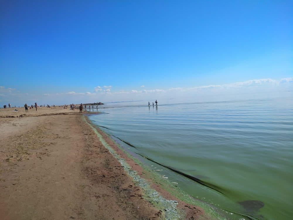 Зеленогорск залив фото