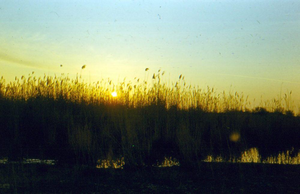 Кызылкум пустыня на закате