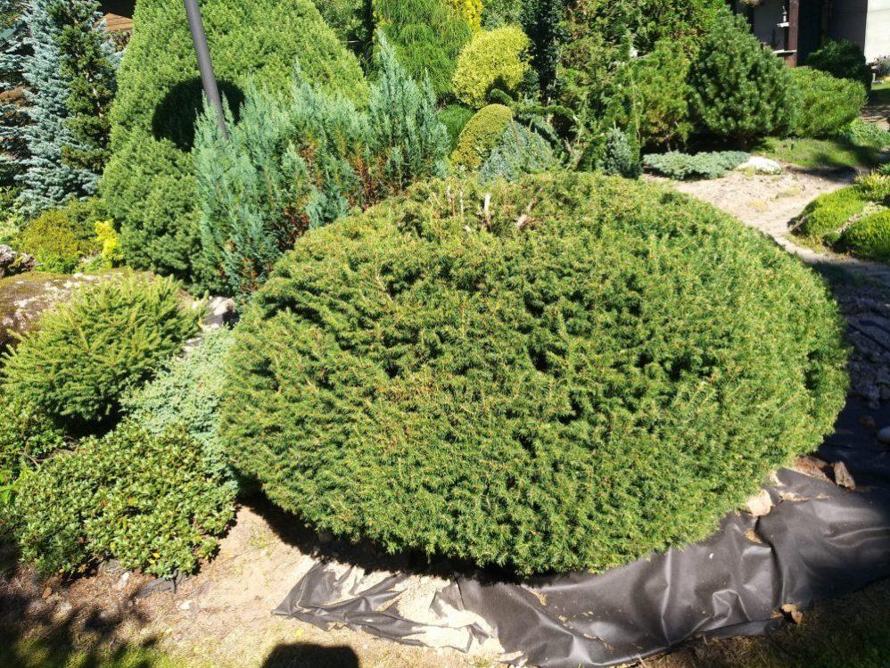Сад в Песках фото