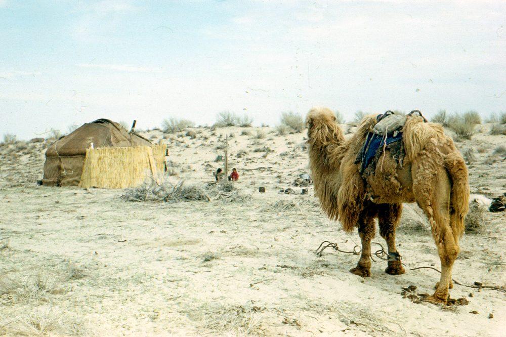 Кызылкум пустыня отзыв