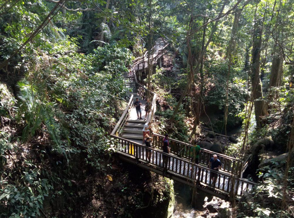 Бали парк обезьян