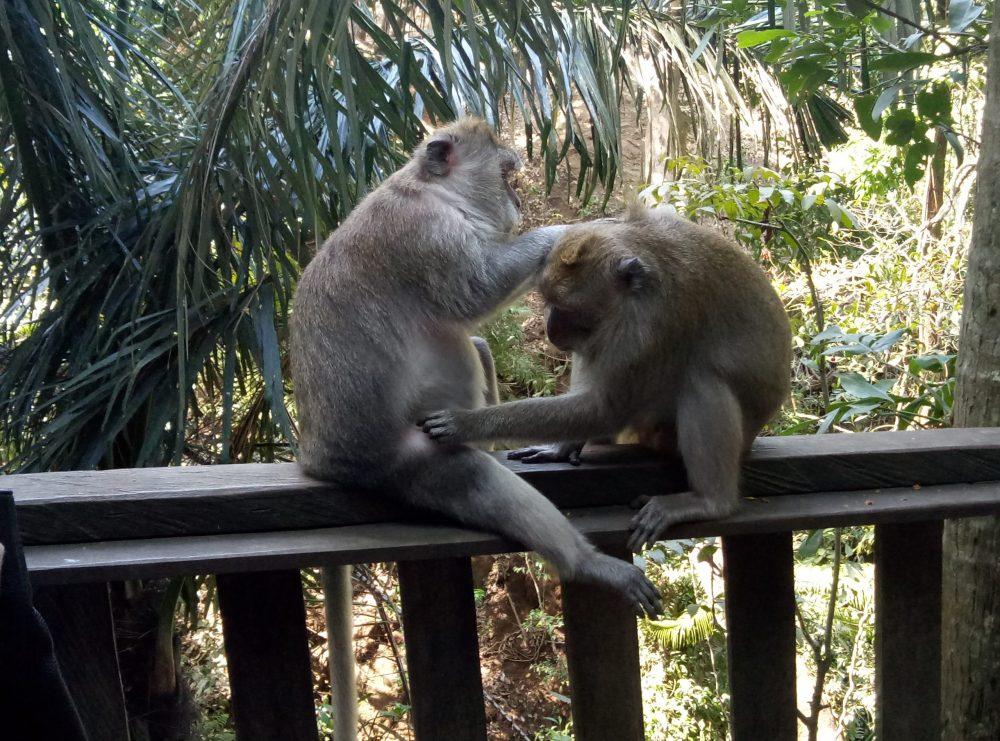Парк обезьян Бали