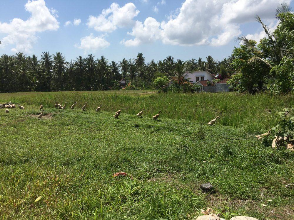 Бали отзыв