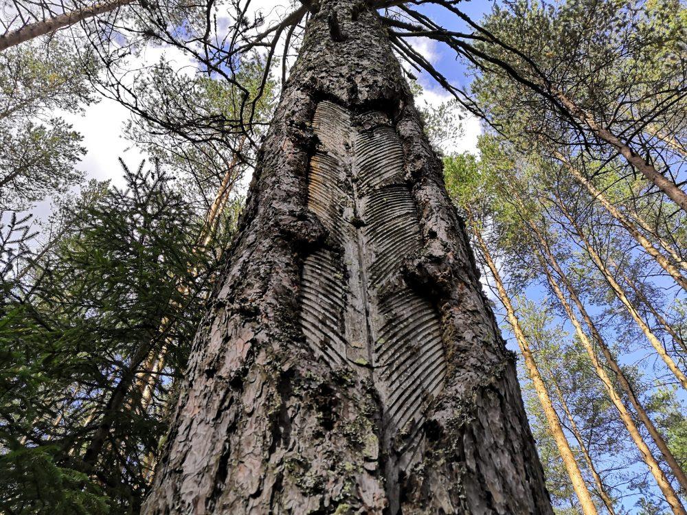 Русский лес фото