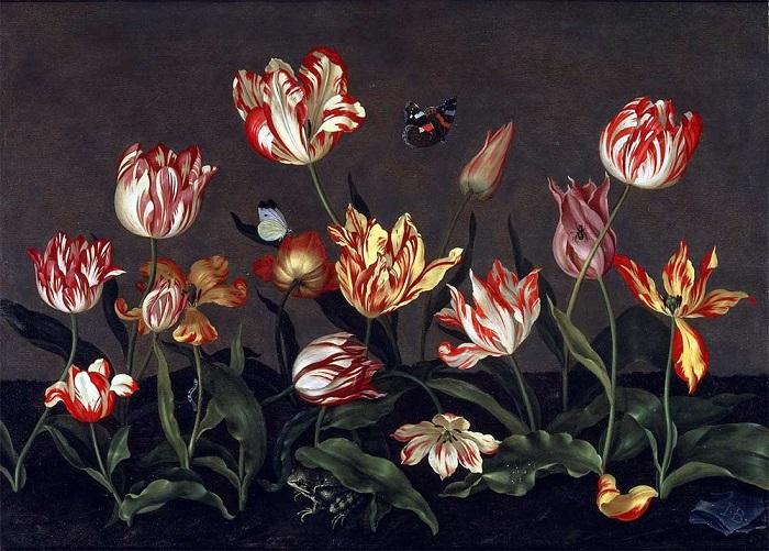 Тюльпаны Гоглландия