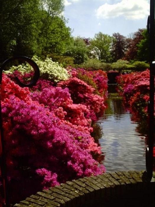 Парк тюльпанов Голландия