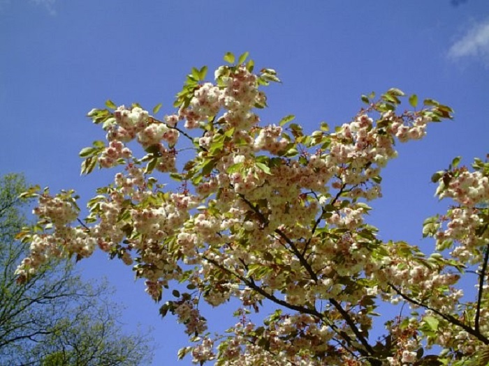 Парк цветов Голландия