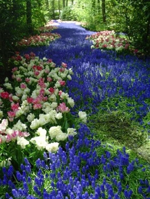 Парк тюльпанов Нидерланды