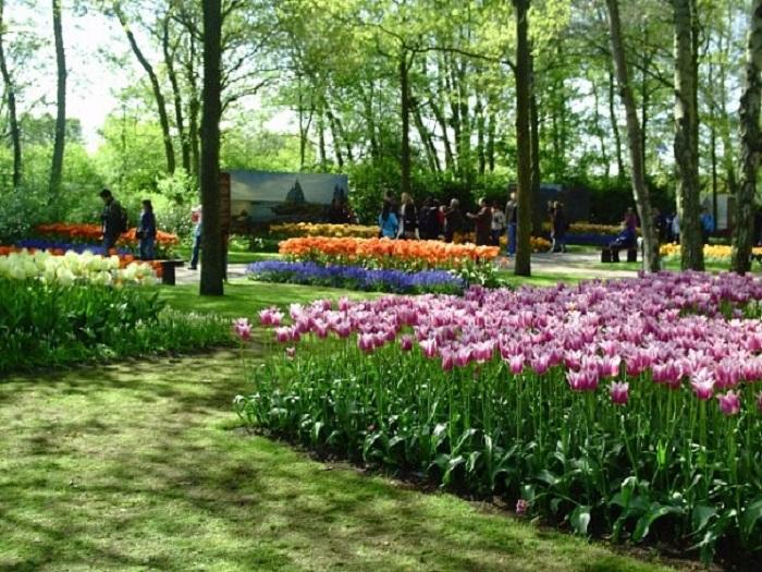 Парк тюльпанов Нидерланды название