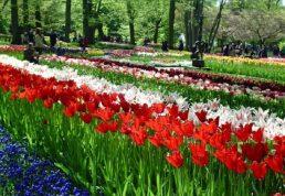 Кекенхоф парк тюльпанов
