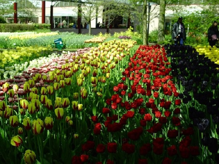 Кекенхоф Нидерланды фото