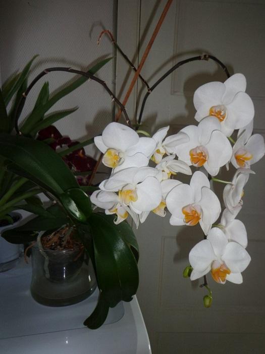 Голландия цветы отзывы