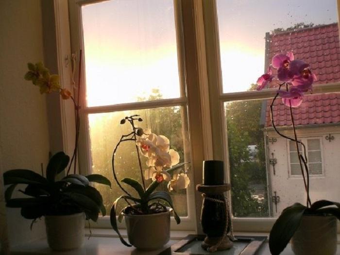 Голландия цветы фото