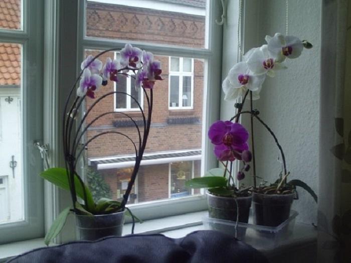Голландия цветы фото отзывы