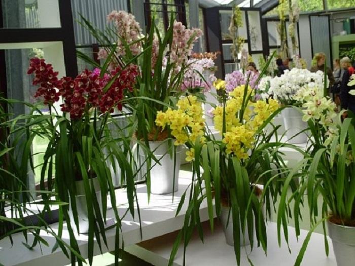 Нидерланды орхидеи фото
