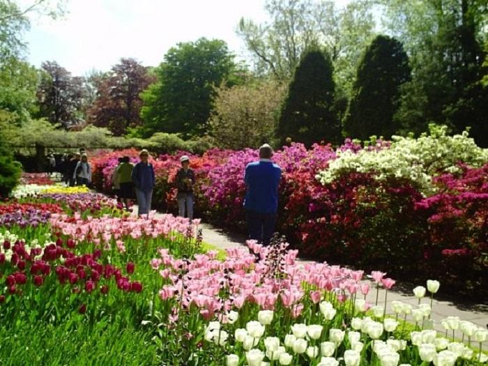 Парк тюльпанов Голландия отзывы