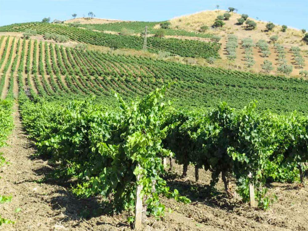 Сицилия вино Этна
