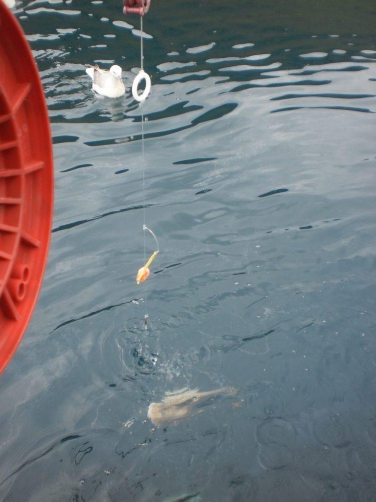 Фарерские острова рыбалка отзыв